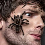 עכביש בחלום